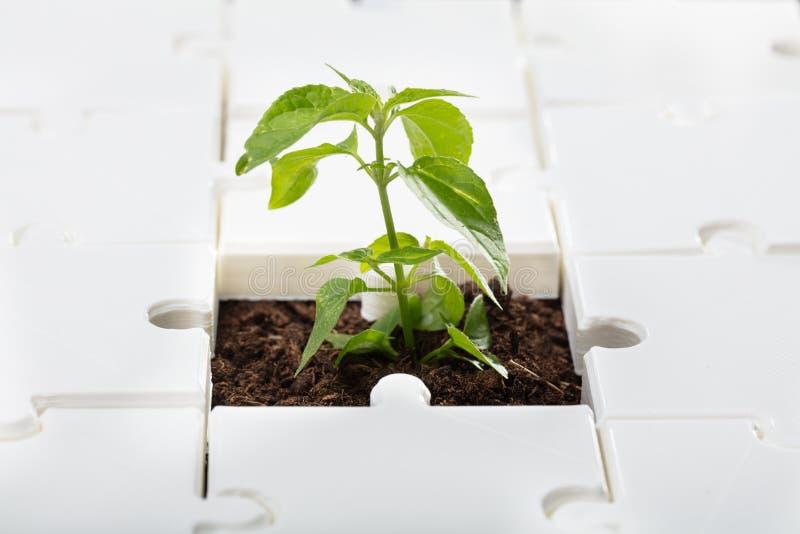 一棵小植物的特写镜头 免版税库存图片