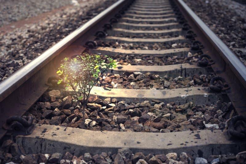 一棵小的树在铁路,增加的火光作用,增加的光线影响,被过滤的图象,深蓝颜色过程中植生 库存图片