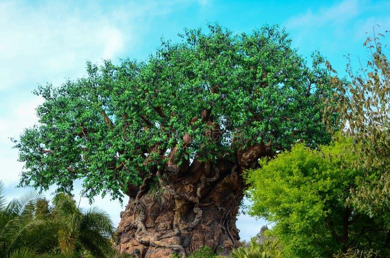 一棵巨大的树 库存照片