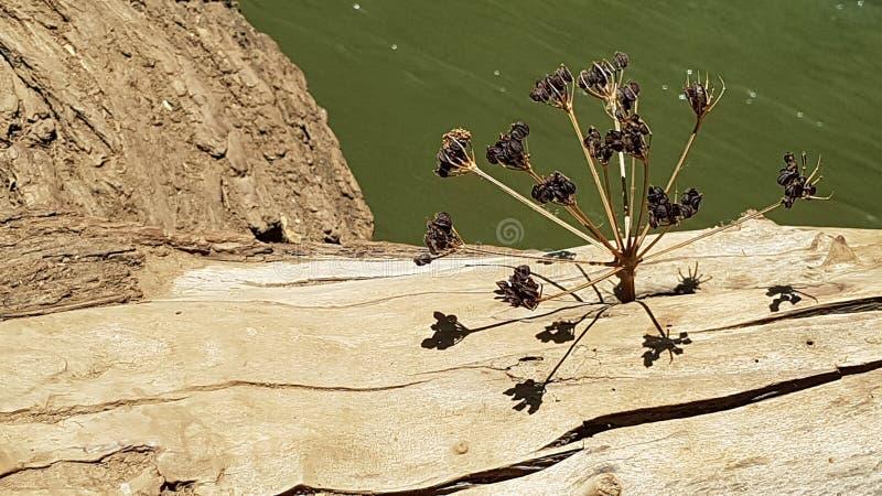 一棵干植物在一个树干的A孔黏附了在创造一个多维结构的Hermon河上用它的阴影,以色列 免版税库存图片