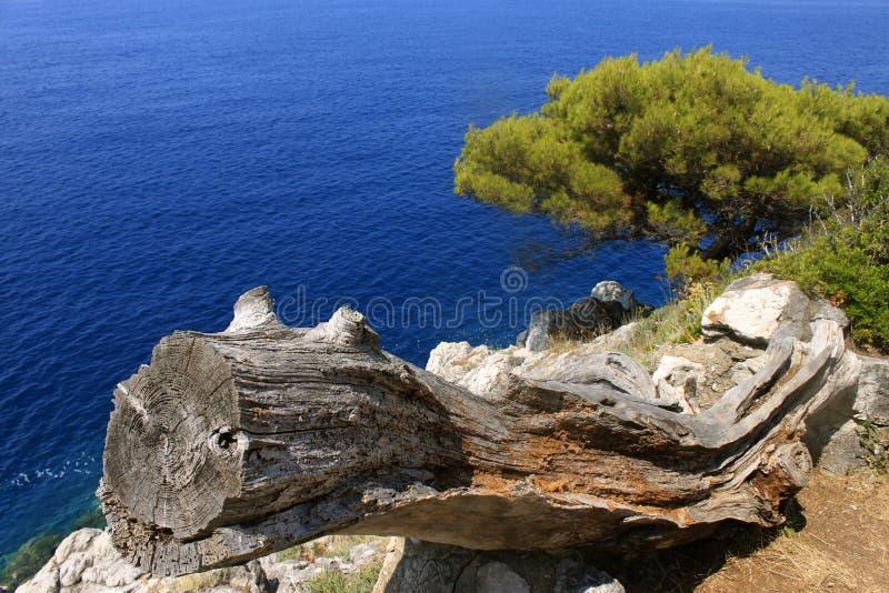 一棵干燥树的看法反对水洛普德岛,克罗地亚背景的全景 库存照片