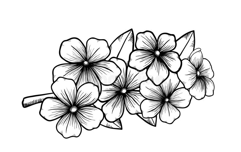 一棵开花的树的分支在用手画图表黑白色的样式的。春天的标志 库存例证