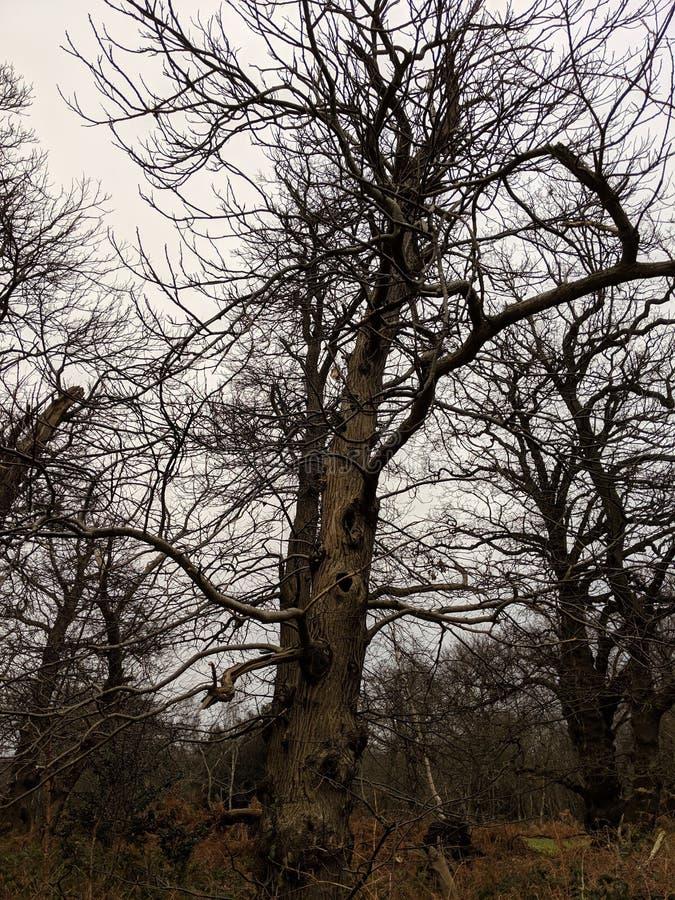 一棵扭转的高棕色树的画象视图 库存照片