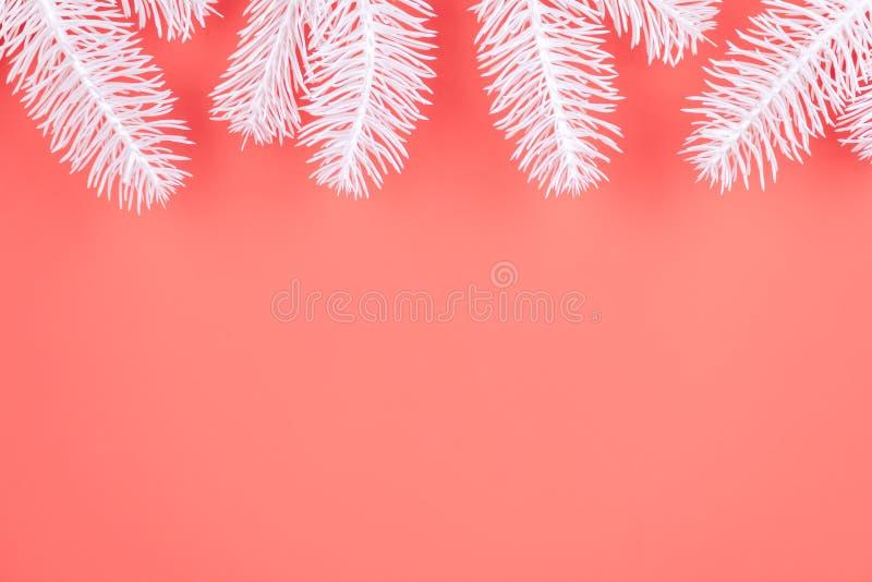 一棵新年的冷杉的白色分支在明亮的珊瑚背景的 免版税库存照片