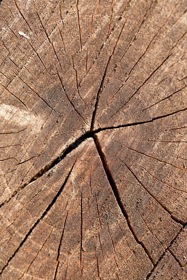 一棵最近裁减树的圆环的特写镜头 免版税库存图片