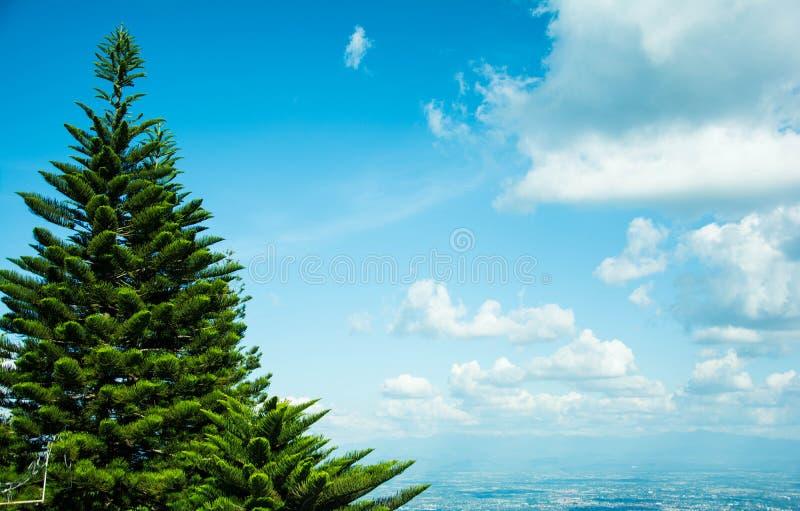 一棵杉树的看法在蓝天中的与白色clound在图片` s右边 库存照片