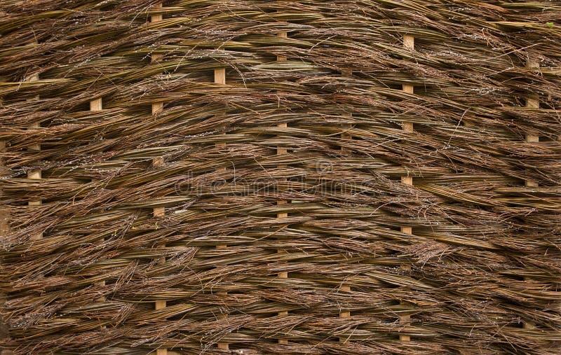 一棵柳条不穿衣服的杨柳的自然纹理 免版税库存图片