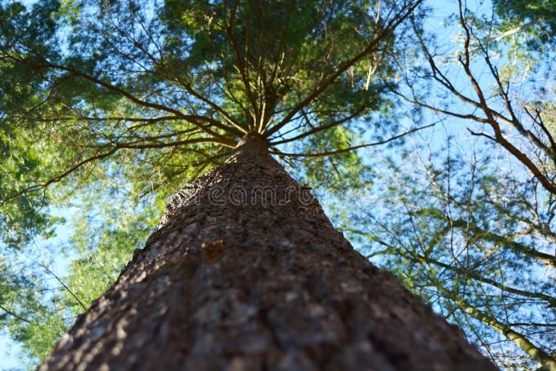 一棵树在大森林 免版税库存照片