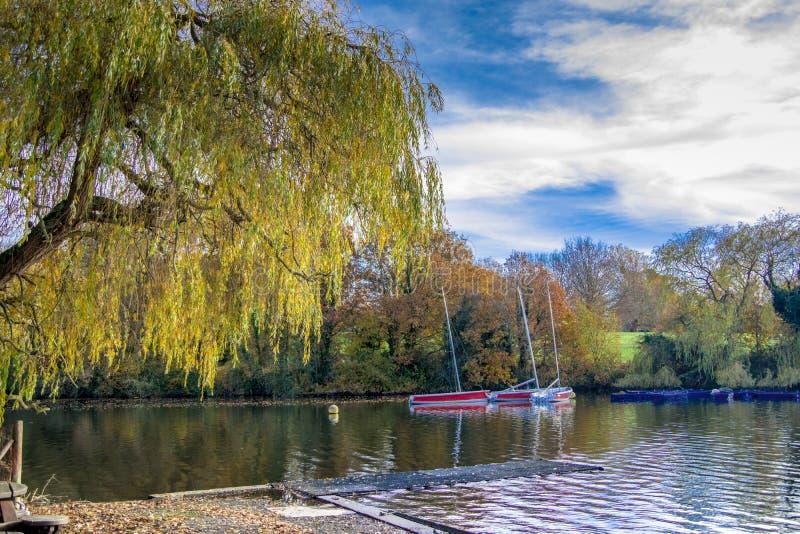 一棵树垂悬在湖的和少量红色风船风景视图在背景中 免版税库存图片