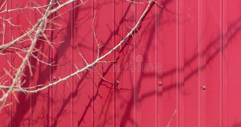 一棵树的光秃的分支反对篱芭的背景的 免版税图库摄影