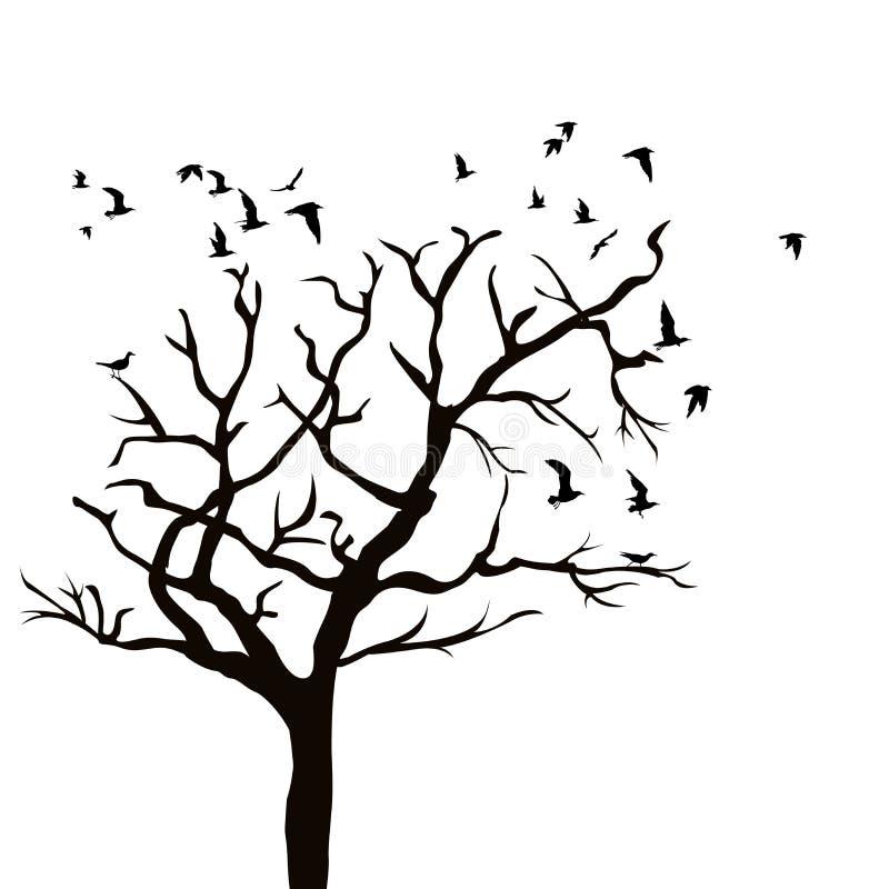 一棵树的剪影没有叶子和鸟飞行的图片