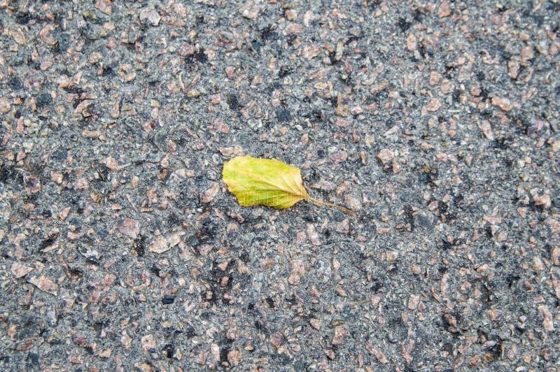 一棵树的叶子在柏油路的 免版税库存照片