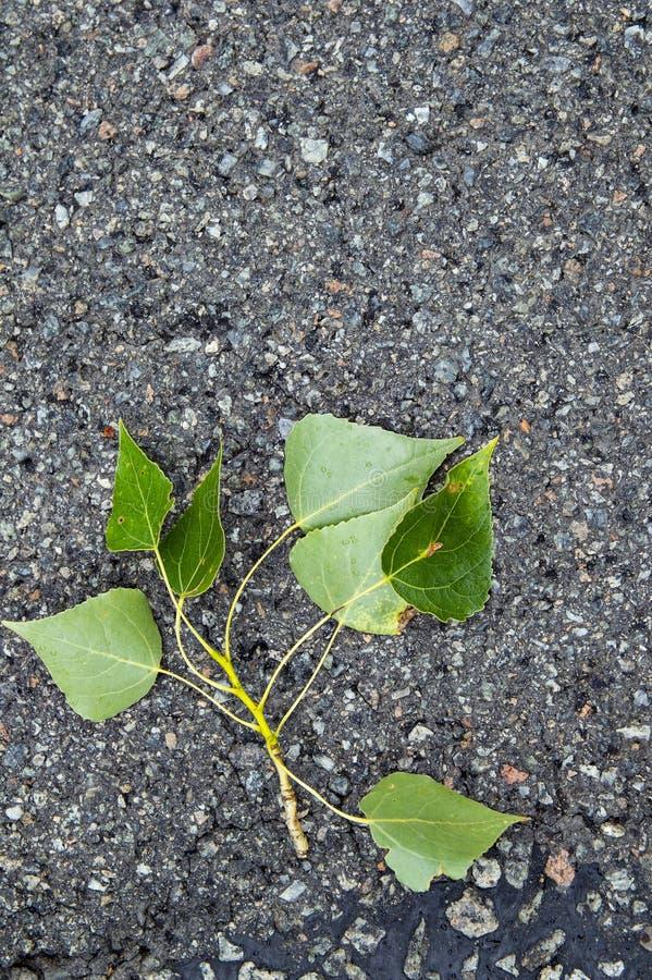 一棵树的叶子在柏油路的 免版税库存图片