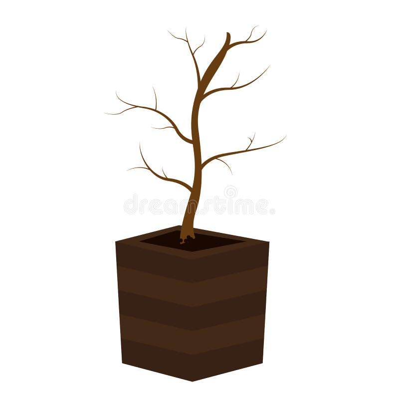 E 一棵树的生命周期从种子的到大树 r 向量例证