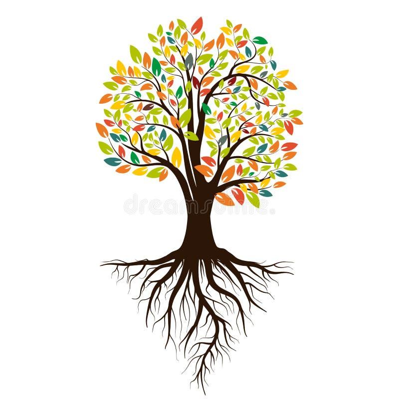 一棵树的秋天剪影与色的叶子的 根源结构树 背景查出的白色 向量 库存例证