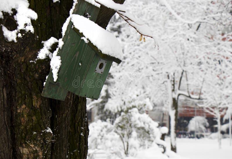 一棵树的绿色木鸟房子在一个公园在一个多雪的冬日给避难所小城市鸟 库存图片