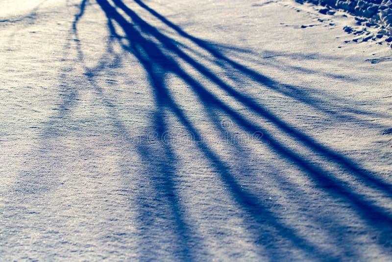 一棵树的阴影在雪的在日落 免版税库存照片