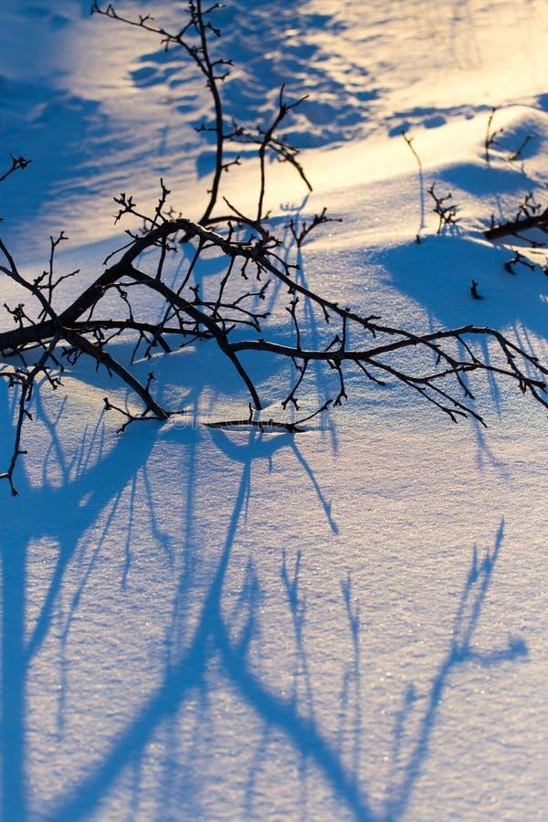 一棵树的阴影在雪的在日落 库存图片