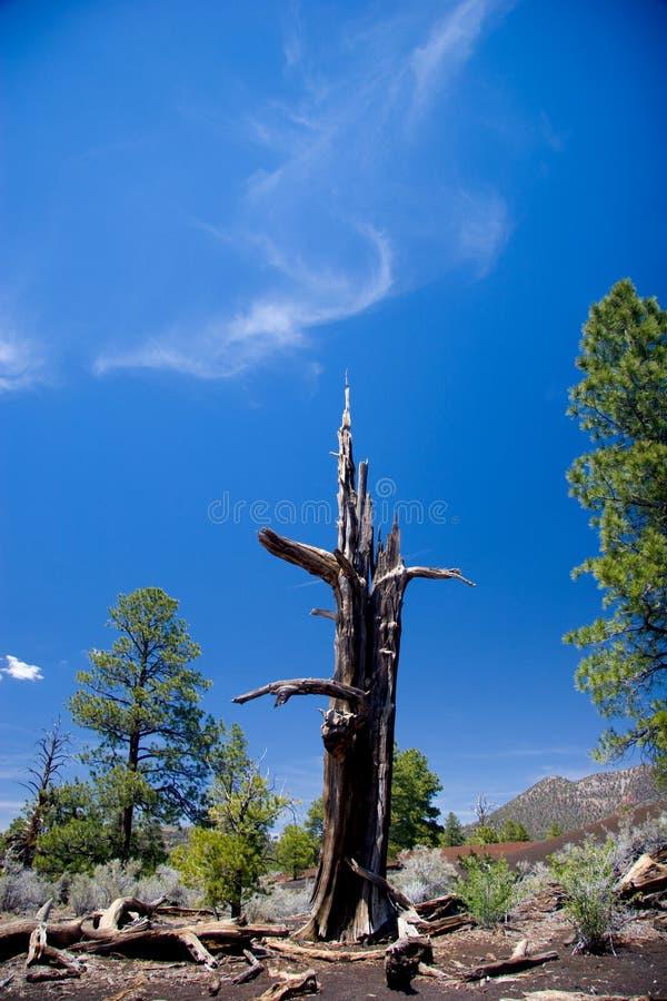 一棵树的骨骼反对小束的云彩和蓝天,日落火山口的 库存照片