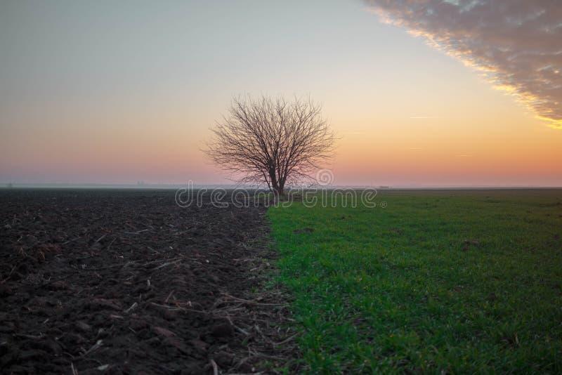 一棵树,在两土地边界,由日落点燃了 库存照片