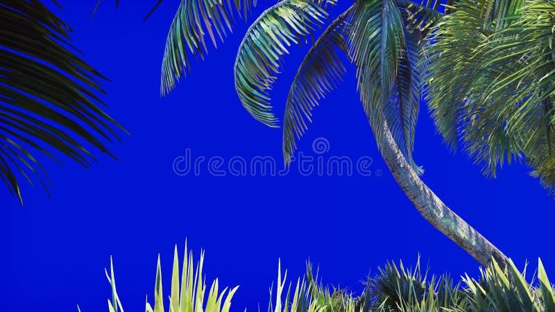 一棵棕榈树和一个热带植物的分支风的在一个蓝色屏幕上 背景美好的例证夏天向量 3d翻译 免版税库存图片