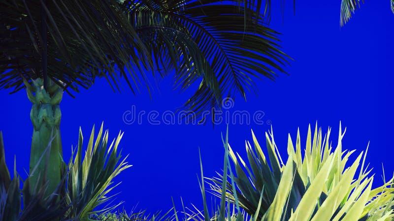 一棵棕榈树和一个热带植物的分支风的在一个蓝色屏幕上 背景美好的例证夏天向量 3d翻译 库存例证