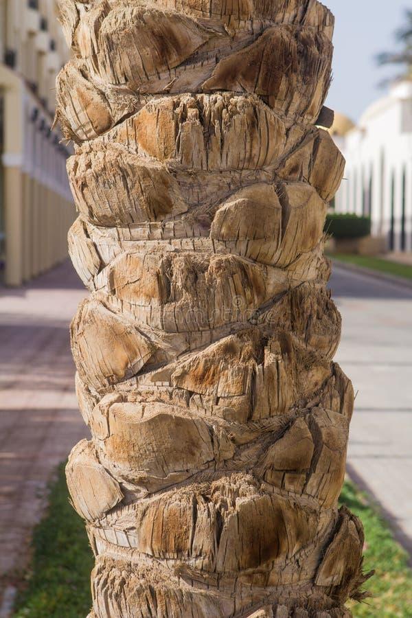 一棵棕榈树的树干在阳光下作为背景 图库摄影