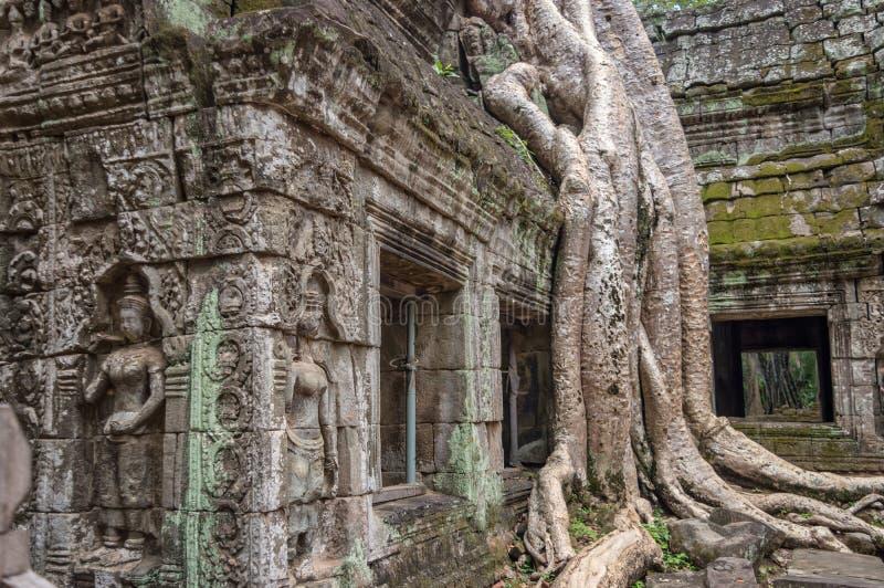 一棵榕树的根在Bayon寺庙在吴哥, Siem Rep柬埔寨的 免版税库存图片