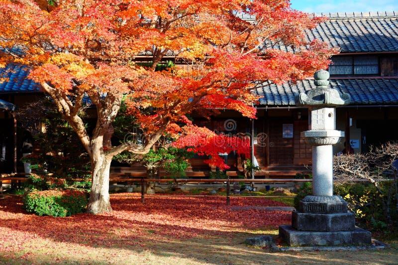 一棵火热的槭树的秋天风景在明媚的阳光下的在Genkoan寺庙庭院里在京都 免版税库存图片
