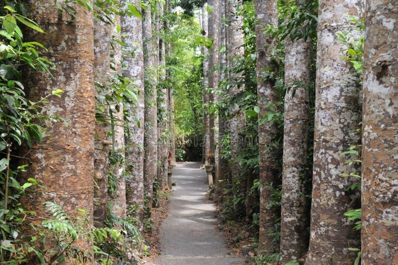 树被排行的路 免版税库存照片