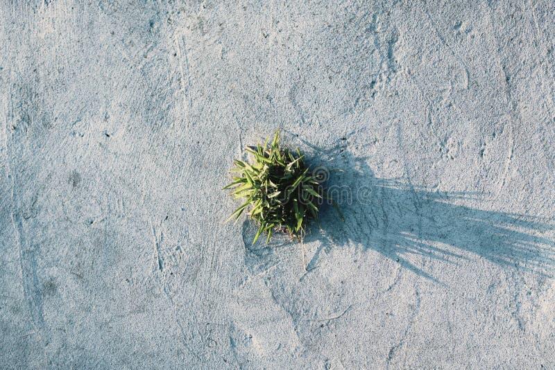 一棵生长植物在夏天早晨下 免版税库存照片