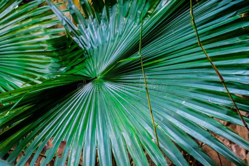 在树的异常的绿色叶子.图片
