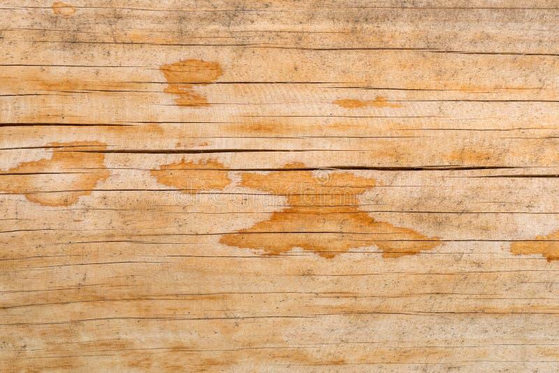一棵自然树的纹理与一个异常的结构的 图库摄影