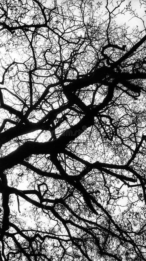 一棵贫瘠树的单色抽象看法 免版税库存照片