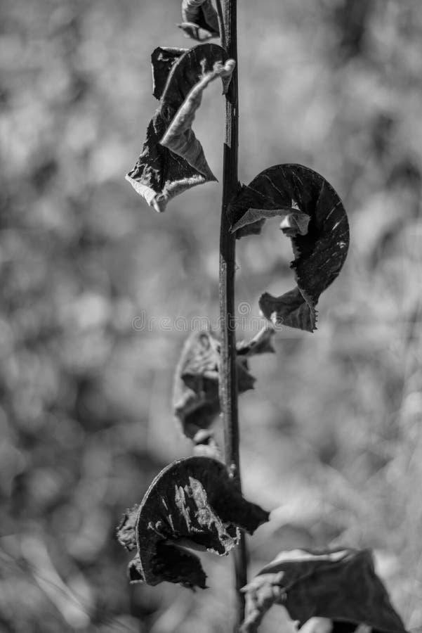 一棵长的词根植物的特写镜头有凋枯的叶子的反对blurre 免版税库存图片