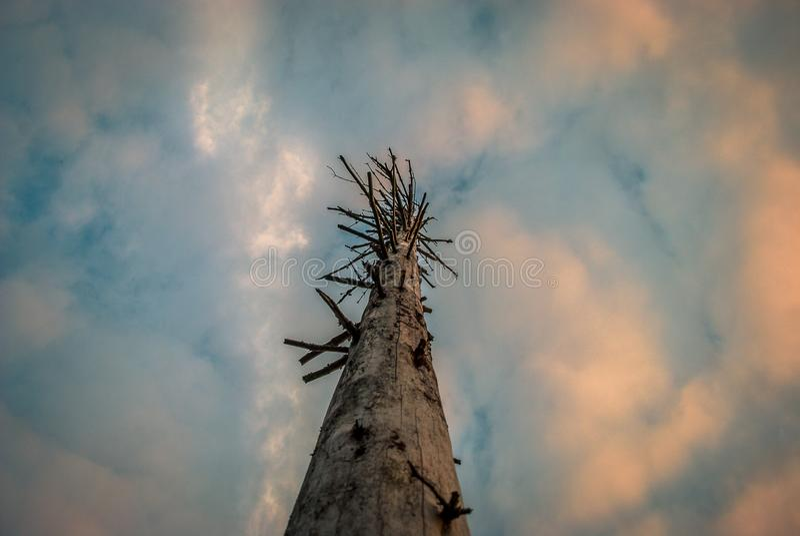 一棵非常偏僻的死的树 库存图片