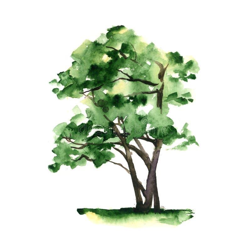 一棵风格化树手画与在白色背景的水彩 皇族释放例证