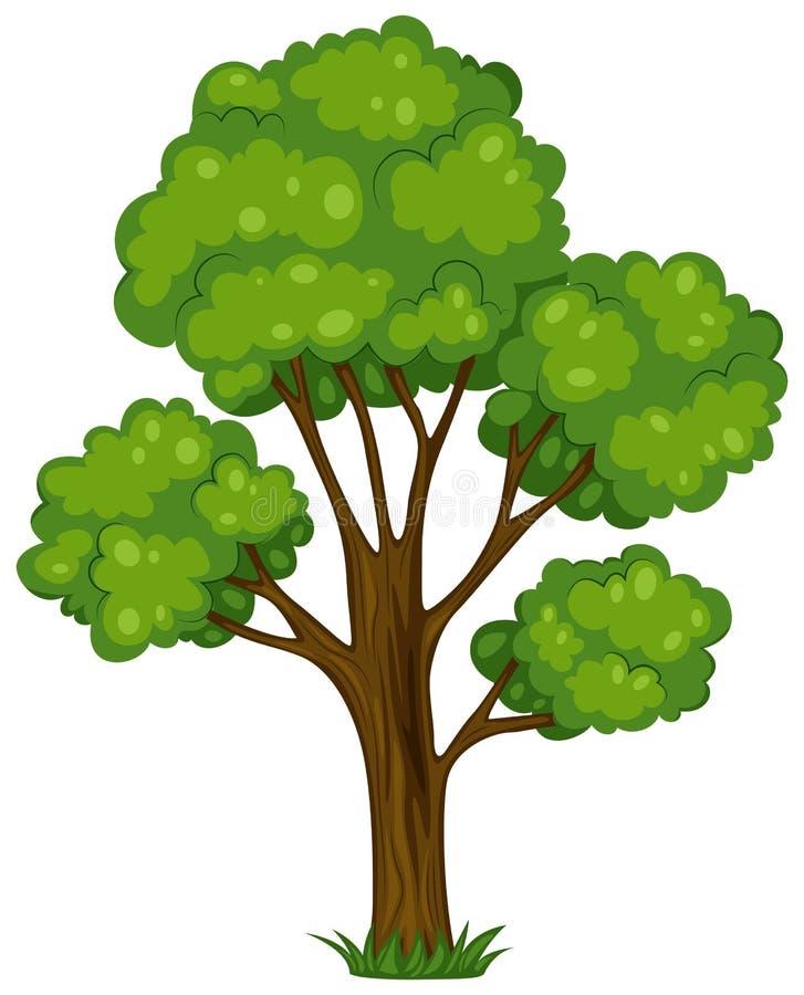 一棵高大的树木 皇族释放例证