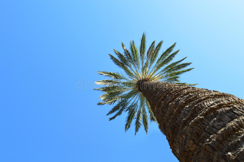 一棵高棕榈树 库存照片