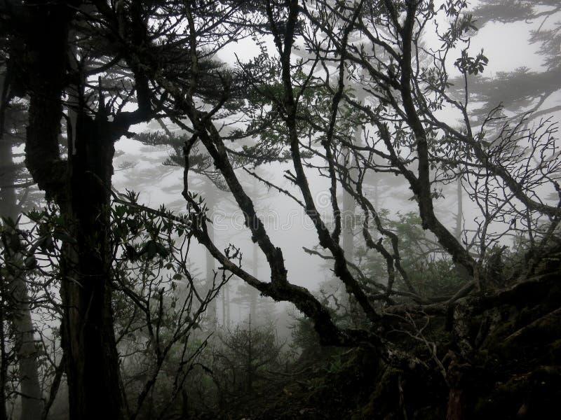 一次有雾的山远足的神奇森林 免版税库存图片