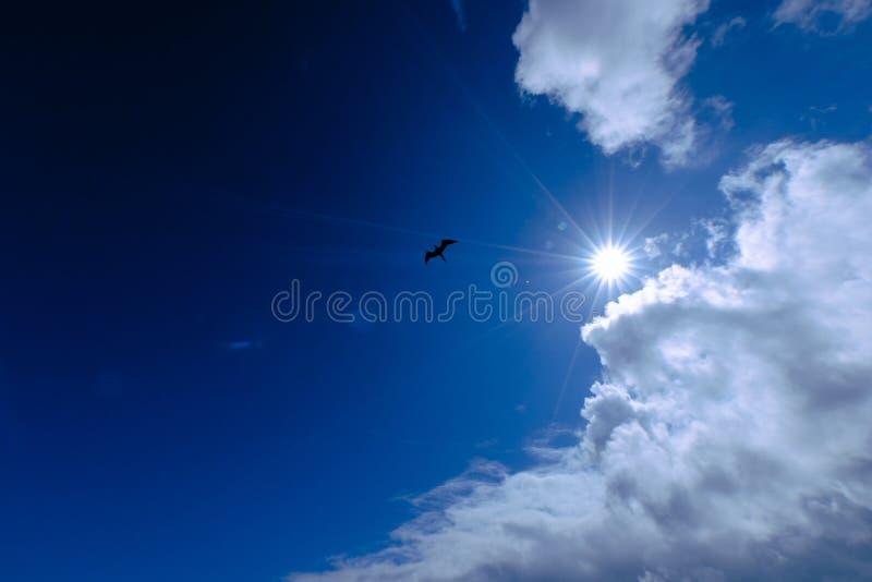 一次鸟飞行的剪影的低角度射击在天空的与太阳和云彩在背景中 免版税库存照片