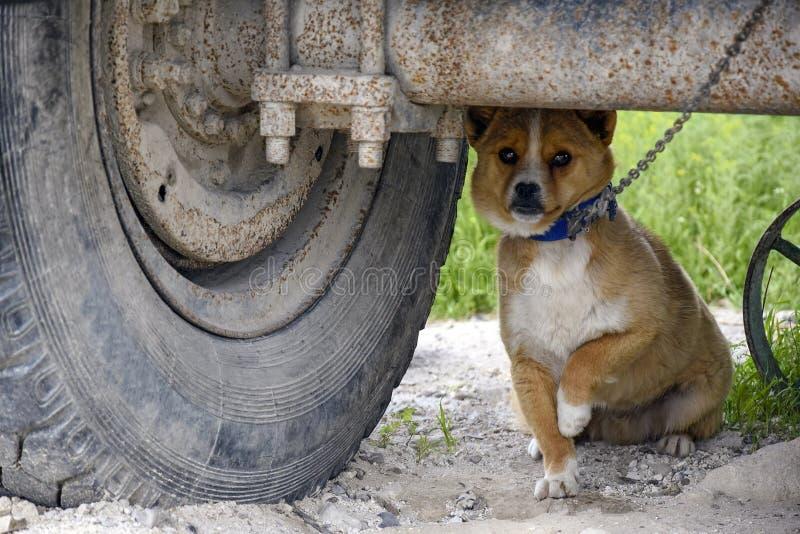 一点与一个白色乳房的红色狗,有一个衣领和一个链子的,在一辆老卡车下 可靠卫兵 免版税库存照片