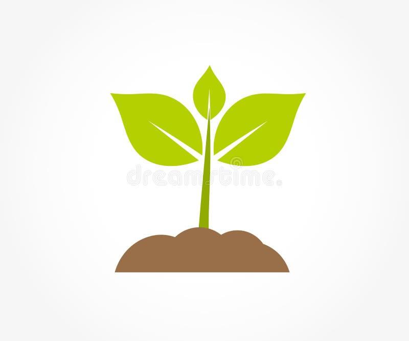 一点发芽在土壤的植物幼木 皇族释放例证