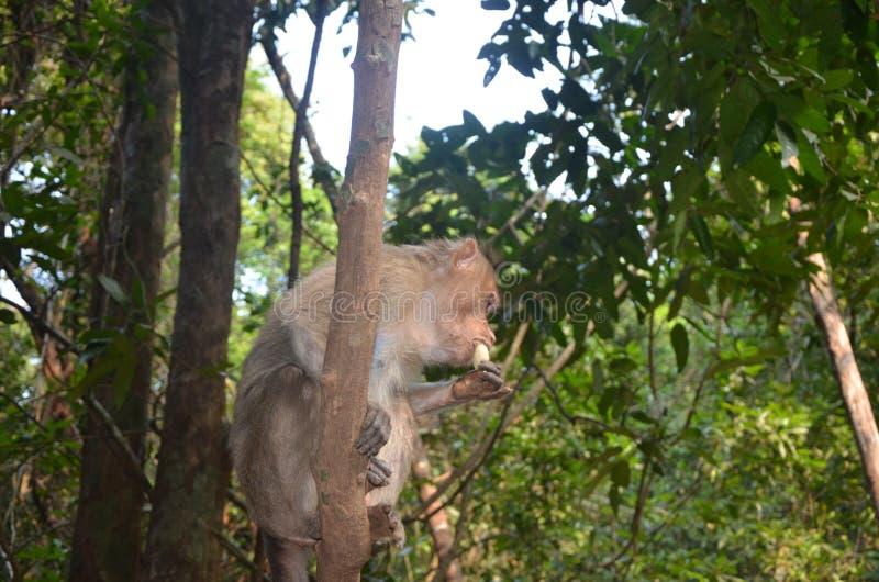 一点吃香蕉的猴子 免版税库存图片