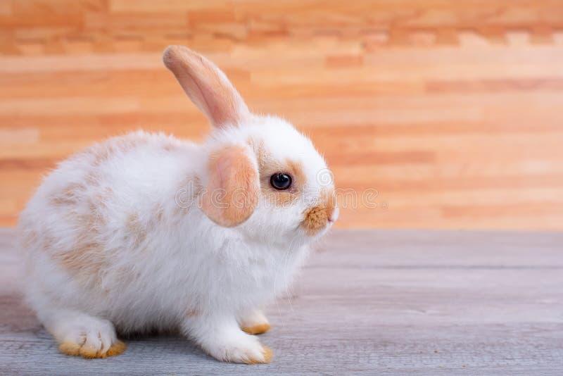一点在灰色桌上的可爱的小兔逗留与作为背景的棕色木样式 图库摄影