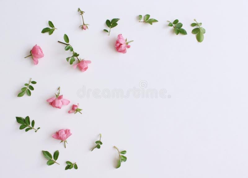 一点在白色木桌上的桃红色玫瑰 柔和的浪漫背景 背景细部图花卉向量 顶视图,平的位置 花 库存照片