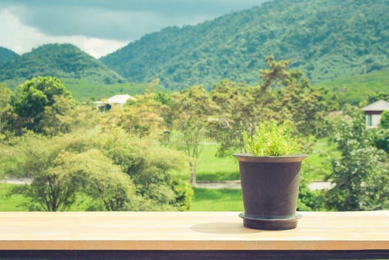 一点在黑塑料花盆的绿色新芽树在与美好的自然观点的木桌上在背景中 库存照片