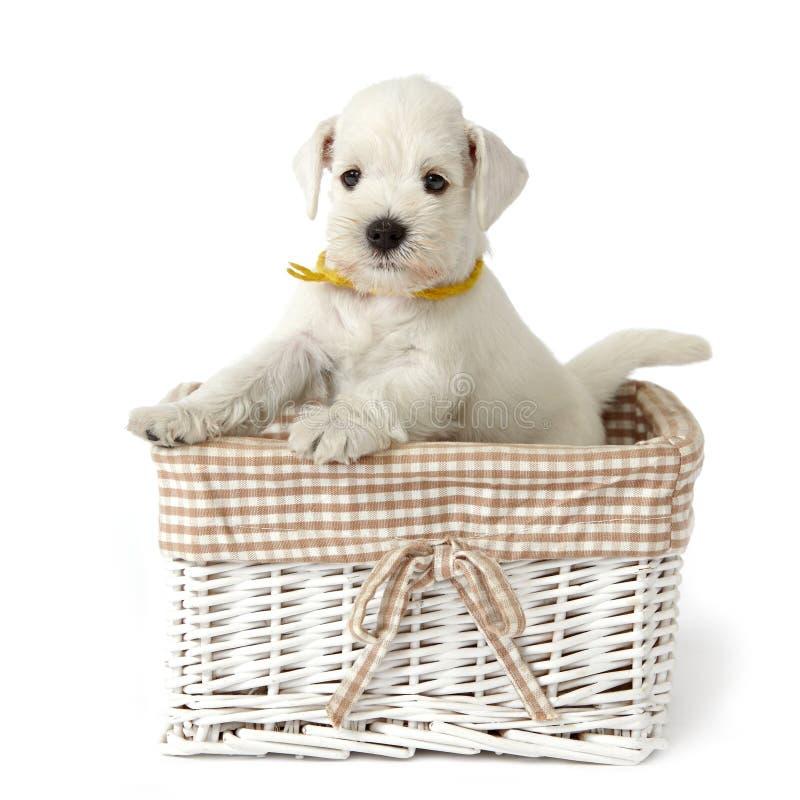 Download 一点小狗白色 库存照片. 图片 包括有 家谱, 感激的, 婴孩, 国内, 纵向, beautifuler - 15683070