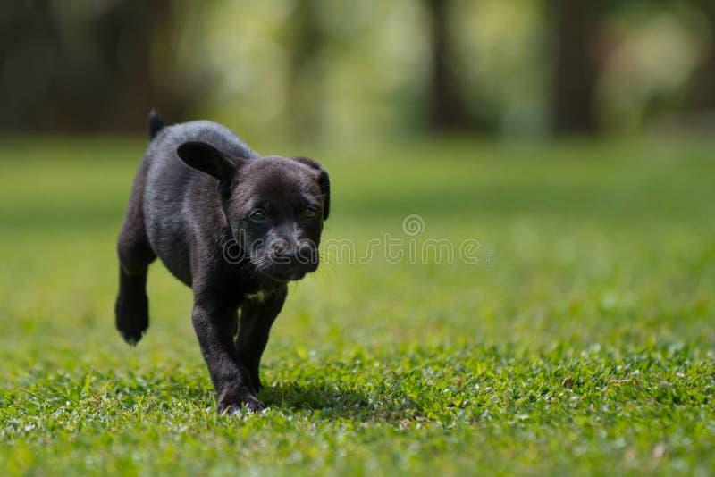 黑一点小狗赛跑 库存照片