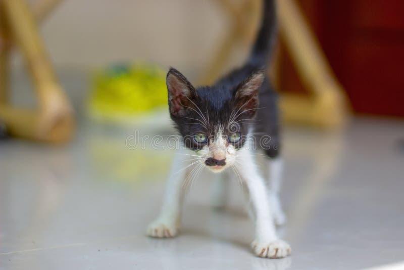 一点小猫从诞生的三个星期 免版税库存图片
